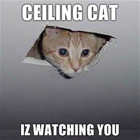 Ceiling Cat Meme You Can Never Enough Cats Culture