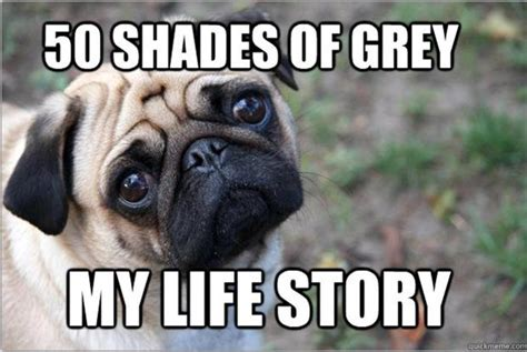 Dog Problems Meme - life and times of a dog the struggle is real 20 pics