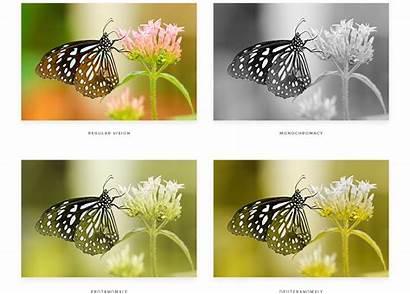 Blindness Colour Designing Colours Medium Protanomaly Common