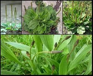 Desherbant Mauvaise Herbe : 17 meilleures id es propos de mauvaise herbe sur ~ Premium-room.com Idées de Décoration