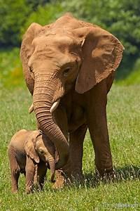Elephant love | Art | Pinterest