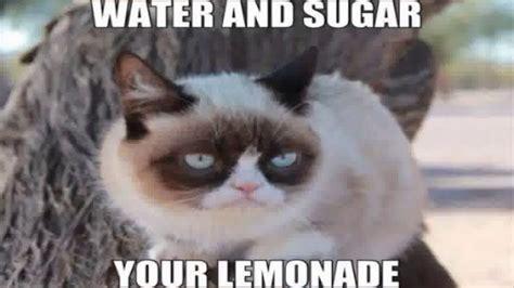 Grumpy Cat Memes For Kids.