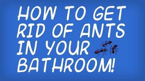rid   black ants   bathroom housekeeping wonderhowto