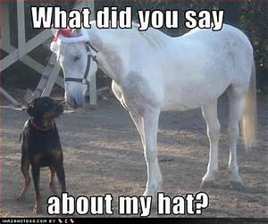 Funny Pictures ... Free Horses Quotes