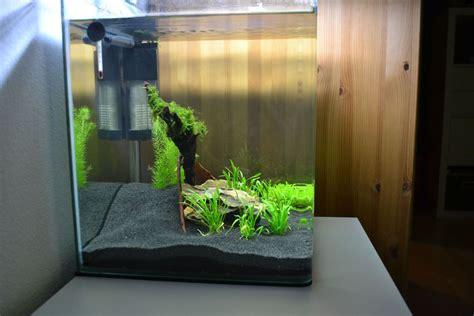 Mein 30l Nano Cube  Aquarienvorstellung  Der Wirbellotse