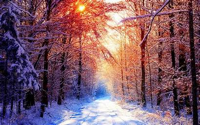 Winter Backgrounds Forest Snowy Sunset Windows