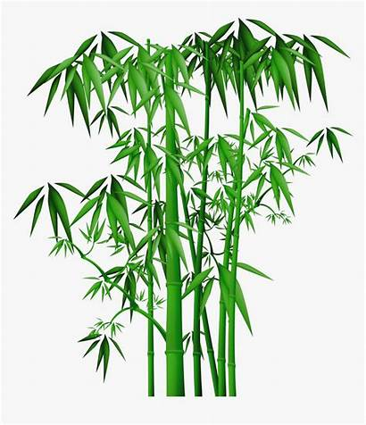 Bamboo Clipart Chinese Transparent Kindpng Picc