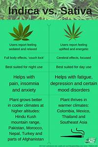 sativa vs indica effects