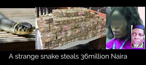 A Strange Snake Sneaks Into Jamb Office And Swallow