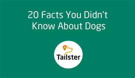 20 facts you didn 39 t know about dogs tailster blog