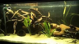Liter Aquarium Berechnen : 464 liter s damerika und asien aquarium update 2 youtube ~ Themetempest.com Abrechnung