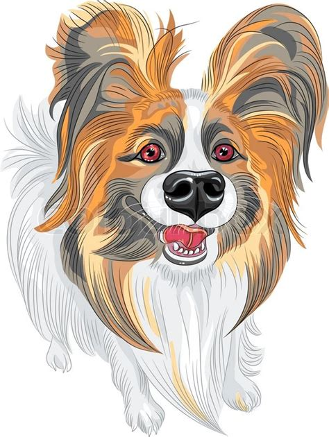 cute smiling papillon red  black dog  long shaggy