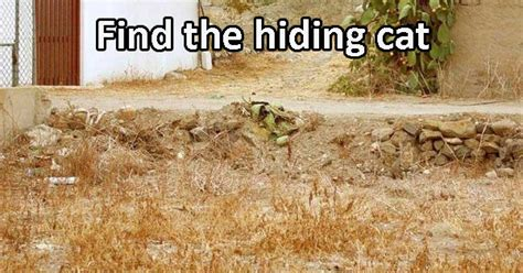 find  cats hiding    playbuzz