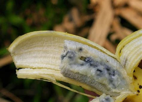 do bananas seeds the things everyone needs to know