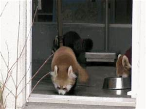 Top 10 Funniest Shocked Animals GIF Collection - Women's ...