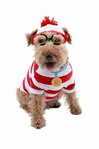 Top 20 Best Cute Dog Costumes for Halloween in 2017 ...