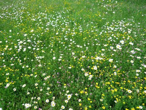 Naturgarten Anlegen Bepflanzen Gestalten by Naturgarten Anlegen Bepflanzen Gestalten Rangelandnews Org