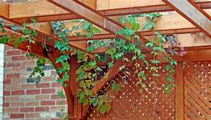 Pflanzen Für Pergola : pergola mit pflanzen wie bauen und mit welchen pflanzen versehen ~ Sanjose-hotels-ca.com Haus und Dekorationen