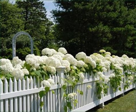picket fence landscaping white picket fence landscaping ideas this white picket fence was the perfect fence for this