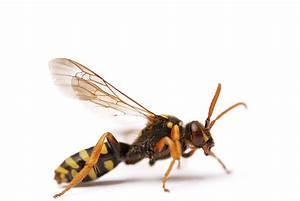Comment différencier une abeille d une guêpe? Nos réponses