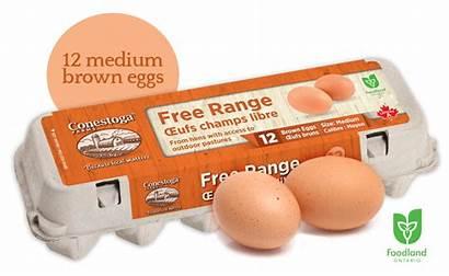 Range Eggs Ontario Freerange Conestoga Farms Organic