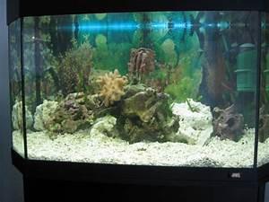 Aquarium Gestaltung Bilder : gestaltung des aquariums boden steine tiere kleines ~ Lizthompson.info Haus und Dekorationen