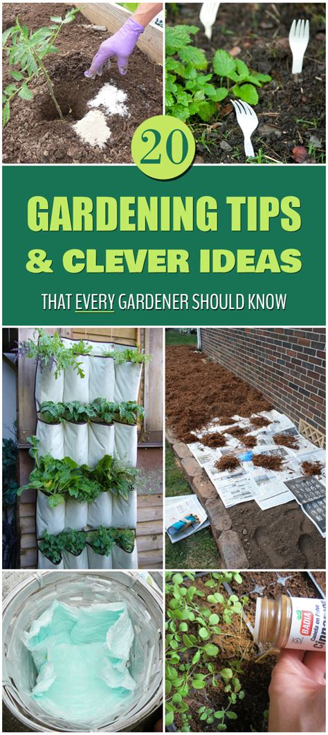 20 gardening tips and clever ideas that every gardener