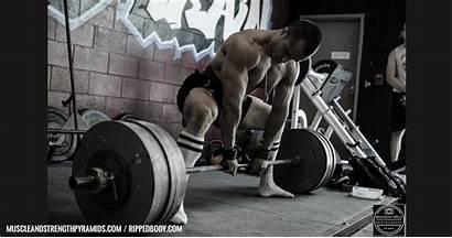 Powerlifting Program Intermediate Sample Training Strength Muscle