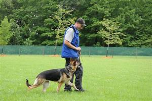 german shepherd training by in dogs we trust llc boot With dog boot camp