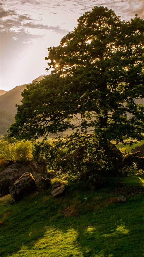 wallpaper ireland   wallpaper trees hills meadows