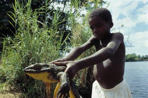 goliath frog san diego zoo animals plants