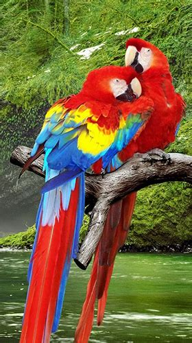 Live Animal Wallpaper App - parrot by live animals apps f 252 r android kostenlos
