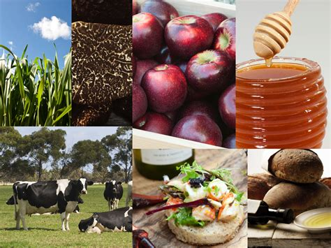 cuisine industrie food industry innovation agriculture and food