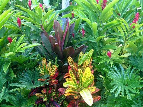 Tropical Garden Inspiration Dwarf Red Ginger, Cordyline