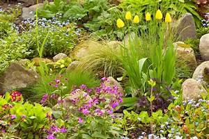 Welche Pflanzen Passen Gut Zu Hortensien : tulpen kombinieren welche pflanzen passen gut zu ihnen ~ Lizthompson.info Haus und Dekorationen