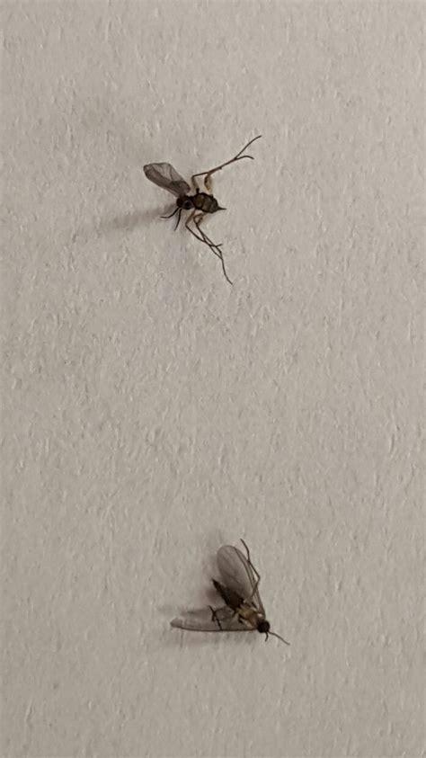tiny indoor bugs   expert