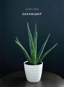 Arrosage Aloe Vera : les 283 meilleures images du tableau aloe vera beauty ~ Nature-et-papiers.com Idées de Décoration