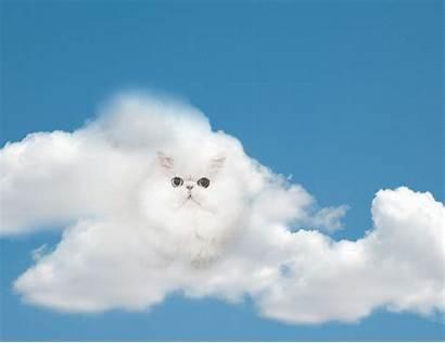Cloud Cat Apple Gifs Clouds Cats Sky