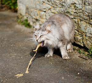 cat puke cat stuff