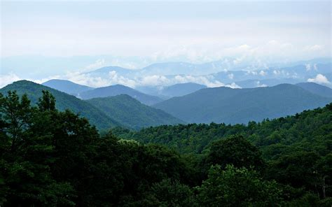 Foggy Evergreen Forest Wallpaper Blue Ridge Mountains Wikipedia