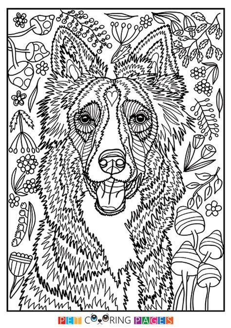 printable border collie coloring page    simple  detailed versions