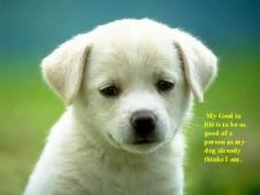 s hypoallergenic earrings dogs