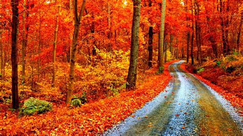 Fall Desktop Backgrounds Autumn Wallpaper by Autumn Path Wallpaper And Background Image 1366x768 Id