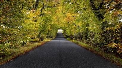 Road Trees Scotland 4k Autumn Uhd Garden