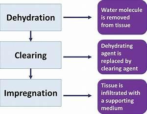 Processing Of Tissue In Histopathology Laboratory