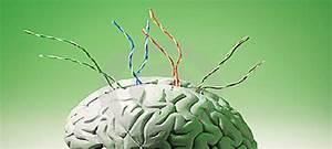Lack Of Attachment Impairs Brain Wiring