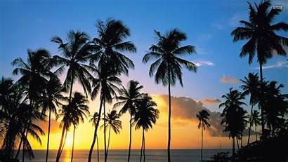 Palm Trees California Wallpapers Wallpapersafari