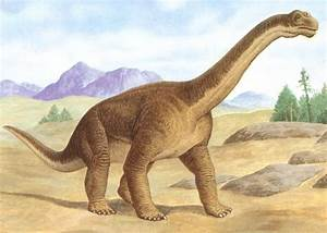 574 best images about Dinosaurs on Pinterest | Museum of ...