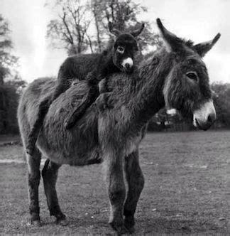 Asino Volante by Omg To I Animals Donkeys