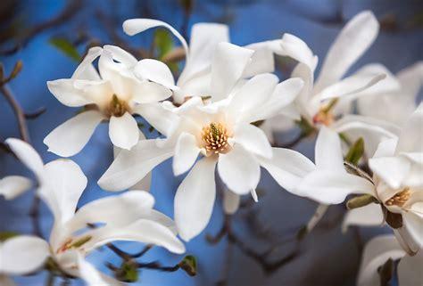 Pirmie ziedētāji pavasara priekam. Plašs ziedošo augu un ...